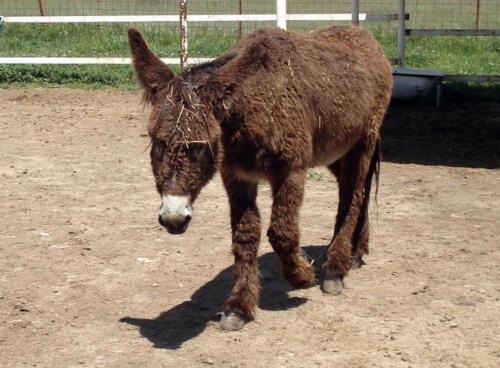 21-burro